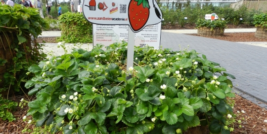 Aanleg tuin Floriade Venlo (9)
