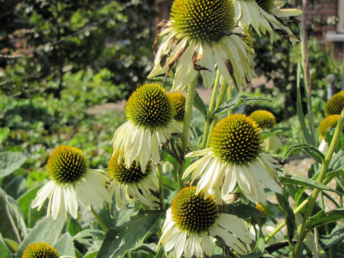 groenplus-hovenier-horst-bloemen