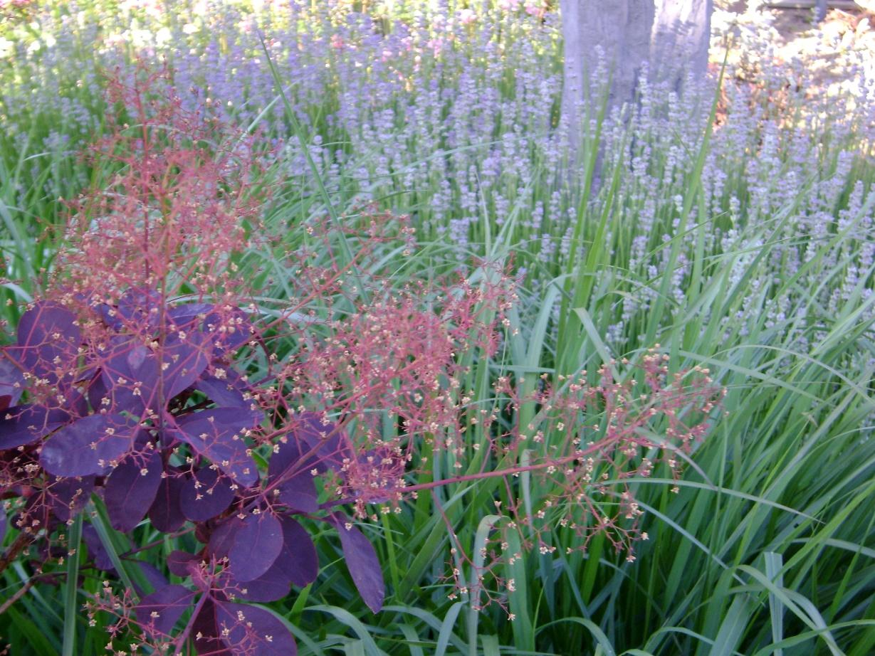 Kleurige voor & achtertuin Horst (5)