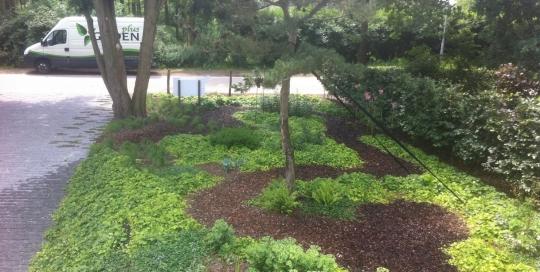 Ontwerp en aanleg tuin Venlo (2)