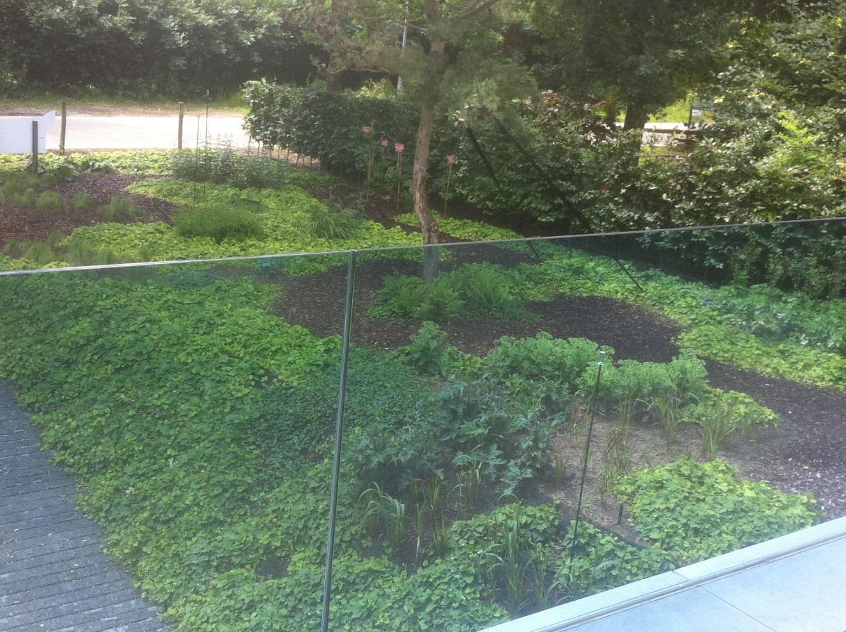 Ontwerp en aanleg tuin Venlo (3)