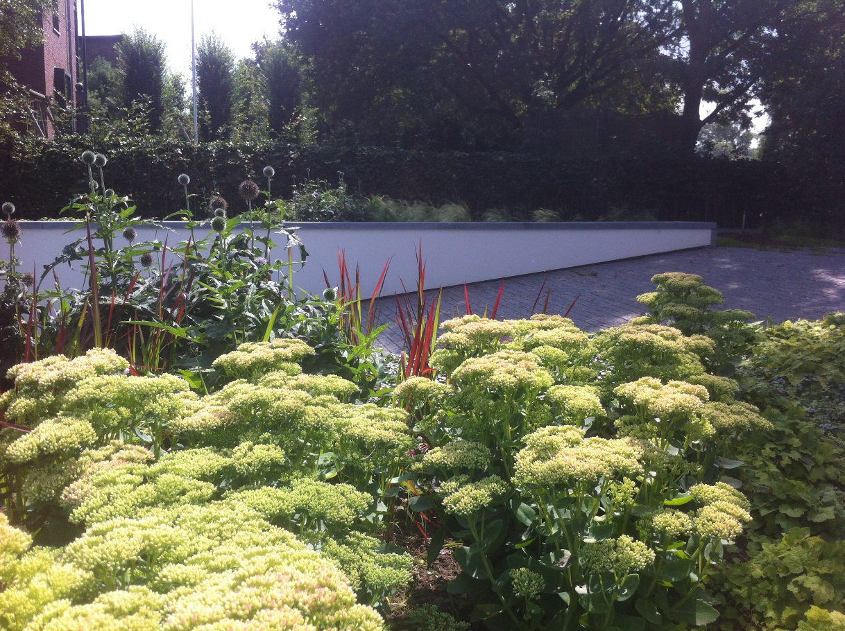 Ontwerp en aanleg tuin Venlo (8)